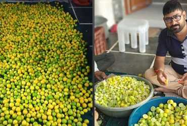 lemon farming